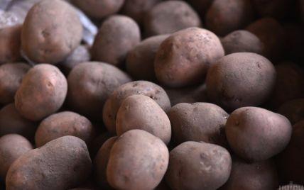 Небезпечне захворювання: на Волині у врожаю картоплі виявили рак