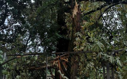 Посмывало и побило урожай, сорвало крыши: в Ровенской области непогода наделала беды
