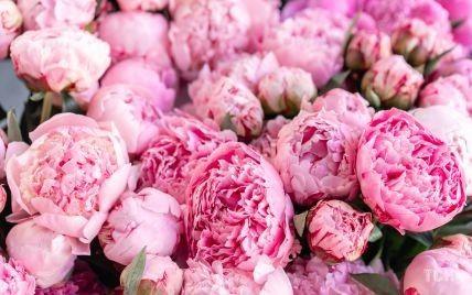 Догляд за півоніями: як зрізати на букет і після завершення цвітіння