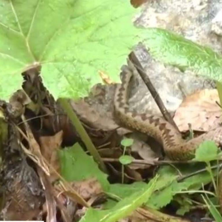 Активизация змей: специалисты рассказали, как уберечься от укусов