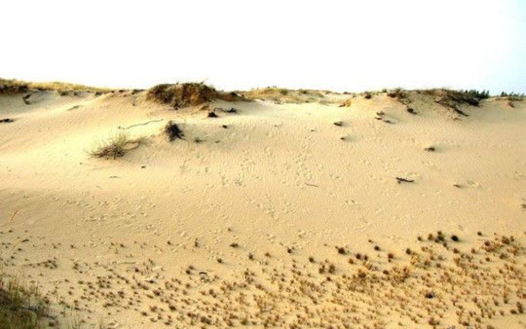 Олешковские пески являются одной из наибольших пустынь в Европе / © oleshki.jimdo.com