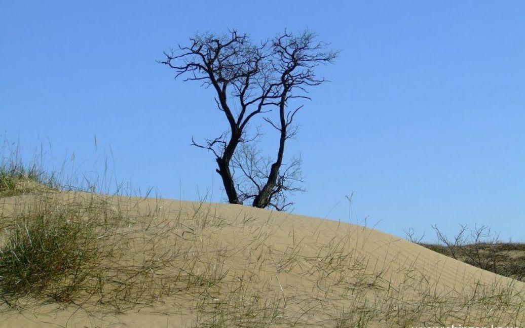 Олешковские пески являются природным парком / © robinzon.ks.ua