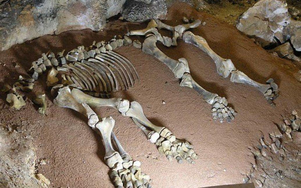 В пещере покоятся кости мамонтенка / © waking-up.org