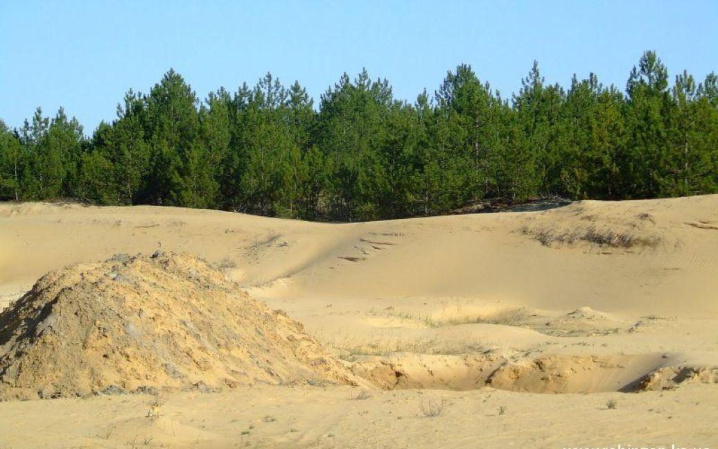 Лесные насаждения сумели остановить пустыню / © robinzon.ks.ua