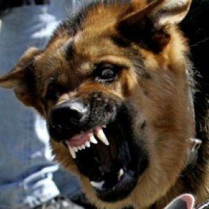 Выскочили на улицу и напали на прохожих: в Донецкой области собаки загрызли 34-летнего мужчину