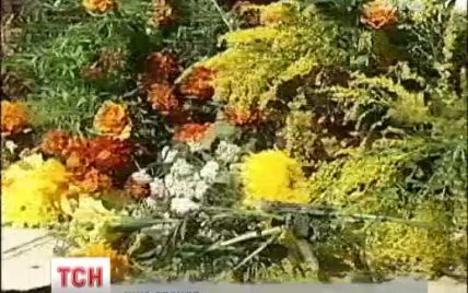 В Україні почали зникати цілющі квіти