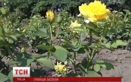 """Київські комунальники """"поховали"""" тисячі трояндових кущів на 12 млн грн"""