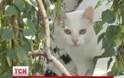 Знімальна група ТСН і випадковий перехожий-герой урятували білого кота
