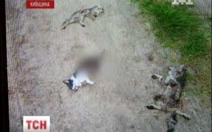 У лісі під Києвом знайшли моторошний могильник з черепами собак та трупами кошенят