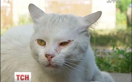 У Києві котик і дві собаки чекають на померлу господарку на тому ж місці, де вона їх лишила