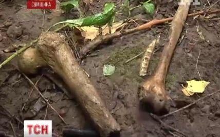 Усіяний людськими кістками ліс на Сумщині жахає перехожих та грибників