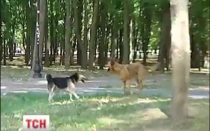 Киянам дали цінні поради, як захиститися від нападу бродячих собак