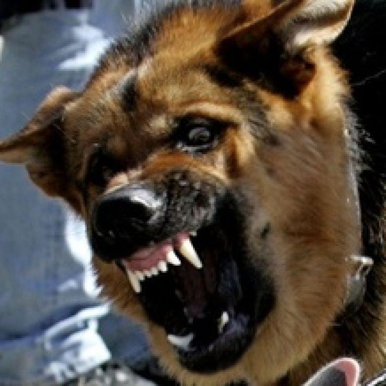Рвані рани голови: в Одеській області шестирічного хлопчика покусала німецька вівчарка