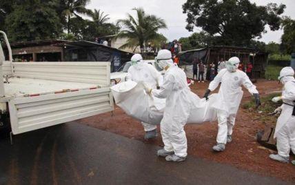 Вчені з'ясували, від кого і як найперша жертва Ебола заразилась вірусом