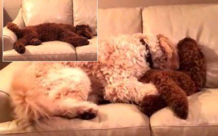 В Мережі з'явилося відео, як пес обіймає собаку, якому сниться кошмар