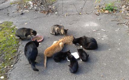 В Киевском зоопарке будут бесплатно раздавать котов, а также выберут имена для двух медвежат