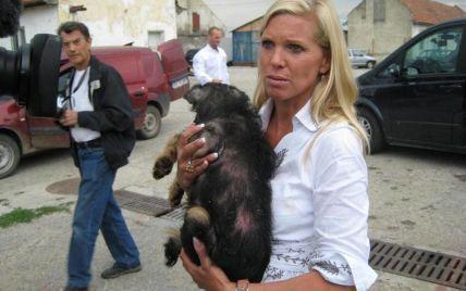 Вбивства собак в Україні можуть стати на заваді Євро-2012