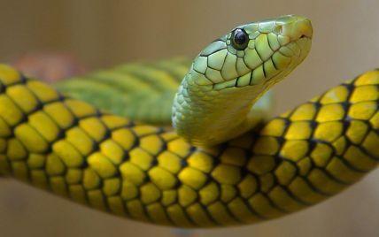 Україна стала розсадником небезпечних змій, які активно нападають на відпочиваючих