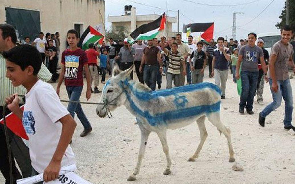 Кфар Кадум. Палестинці пофарбували віслюка у кольори ізраїльського прапора під час демонстрації на підтримку запиту до Організації Об'єднаних Націй щодо визнання державності Палестини. / © AFP