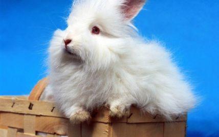 Бренд Benetton отказался от ангорской шерсти из-за жалости к кроликам