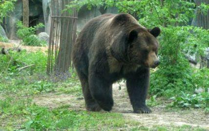 Канадець відбився від ведмедя, вхопивши його за язика