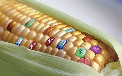 ГМО-кукурудза провокує ракові пухлини розміром з тенісний м'яч