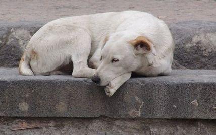 """Вбивці собак об'єдналися в рух та """"зачищають"""" Київ від тварин"""