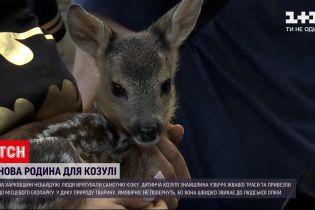 Новини України: до харківського екопарку привезли знайдене маля козулі
