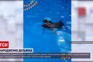 Новости Украины: в харьковском дельфинариуме на свет появился детеныш