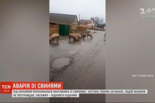 Вантажівка зі свинями перекинулася під Харковом
