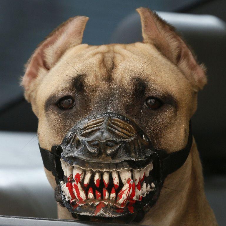 У Кривому Розі розгорівся скандал через собаку, який напав на 5-річну дитину