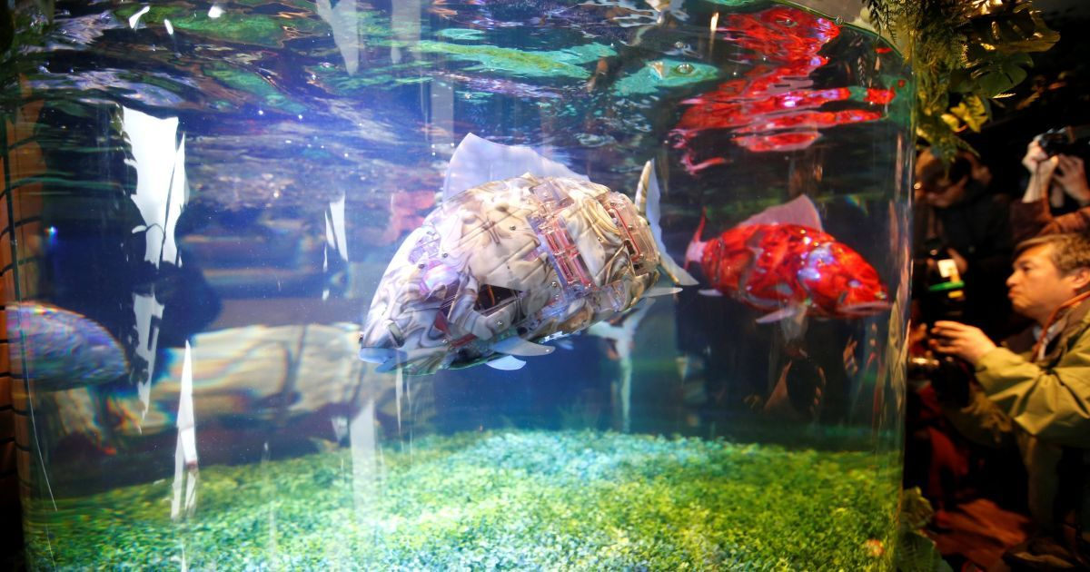 Механизированная рыба в аквариуме / © Reuters