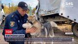 Новини України: в Полтавській області копи допомогли повернути додому собаку, який потрапив у ДТП