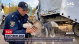 Новости Украины: в Полтавской области копы помогли вернуть домой собаку, попавшую в ДТП