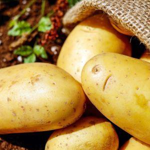 В Україні почала дешевшати молода картопля: кілограм коштує від 9 грн