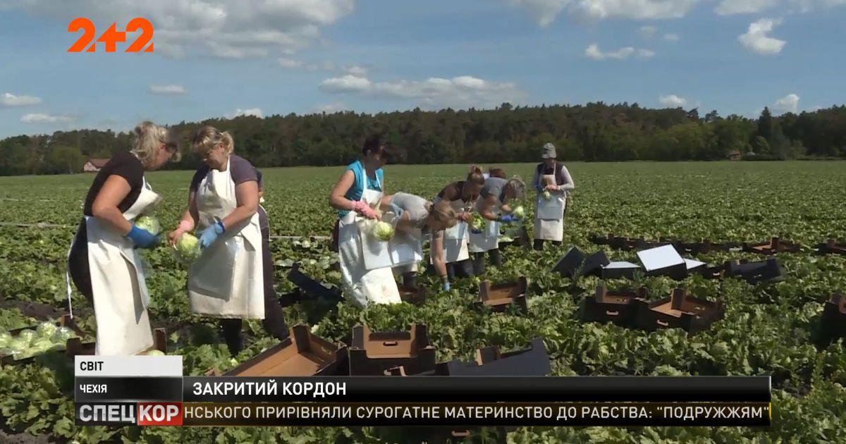 Чехия открыла границы для украинских рабочих - без них немало урожая может пропасть
