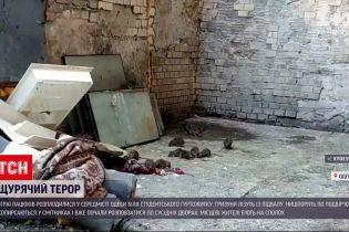 Новини України: щурячий терор в Одесі - зграя гризунів заполонила подвір'я студентського гуртожитку