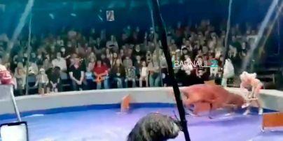 В Барнауле олень напал на дрессировщицу: в соцсетях говорят о жестокости к животным