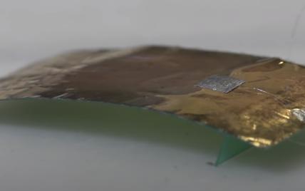 Ученые создали таракана, которого невозможно раздавить: зачем
