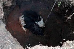 В Кривом Роге тринадцать спасателей освобождали из подземелья корову