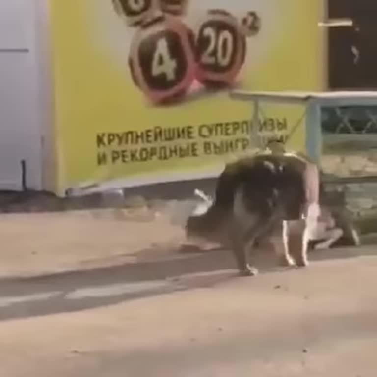 Сеть умилило видео с бездомным псом, который отвязывает породистую собаку
