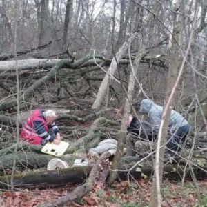 На Киевщине женщину насмерть придавило деревом во время сбора грибов