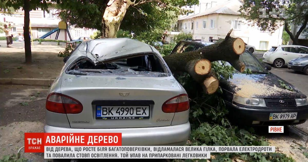 Аварийное дерево в Ровно: одна ветка повредила сразу четыре машины