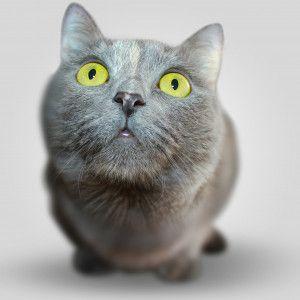 Бросал из окна и держал в морозилке котенка: лучанин-живодер загремел за решетку на 5 лет