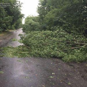 Повалені дерева і град з куряче яйце: Миколаївська область оговтується від негоди (фото, відео)