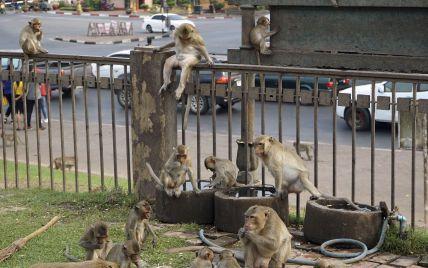 Повстання макак у Таїланді: голодні тварини заполонили вулиці міста Лопбурі