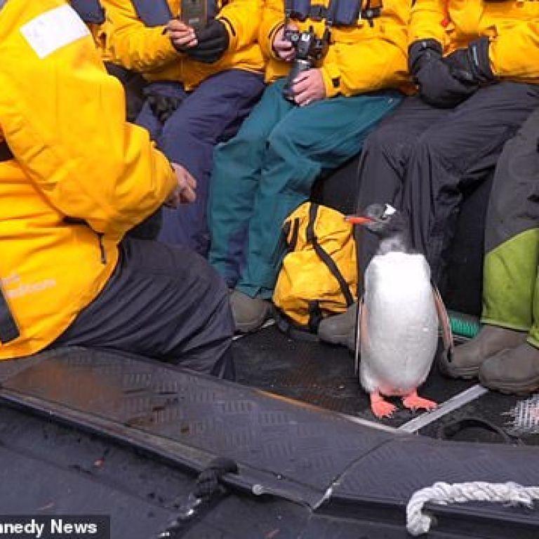 В Антарктиді пінгвін врятувався від косаток, застрибнувши в човен з туристами (відео)