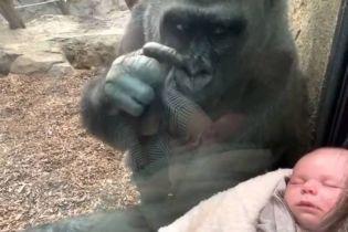 """В зоопарке США горилла прикипела глазами к спящему младенцу и """"познакомила"""" его со своим детенышем (видео)"""