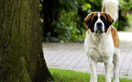 В Сумской области собака покусала женщину: владельца оштрафовали на 51 гривну
