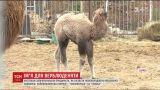 В харьковском зоопарке родилась 40-килограммовая верблюдица
